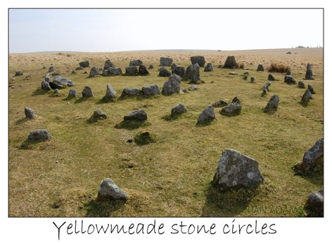 1 yellowmeade