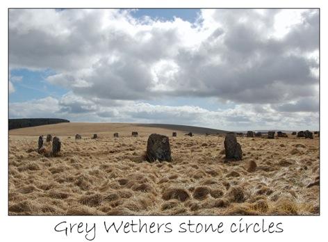 2 grey wethers
