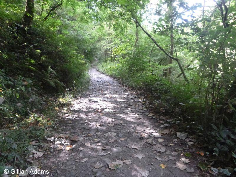 5 upper path