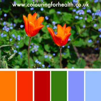 Orange tulips flowers colour palette