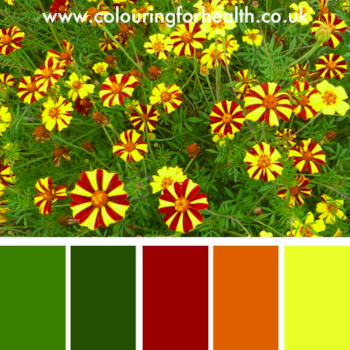 Pretty dahlia flowers colour palette