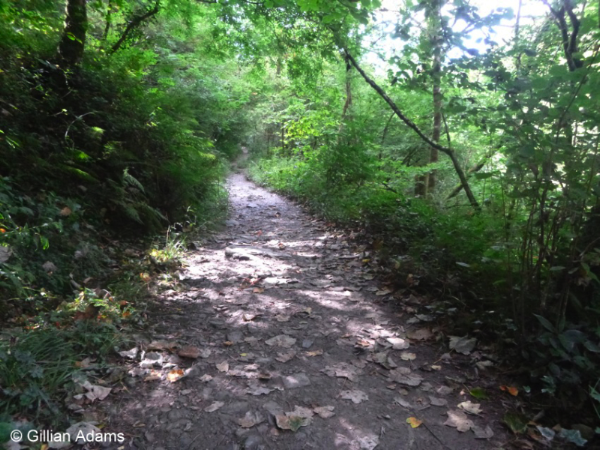 Upper path, Lydford Gorge © Gillian Adams