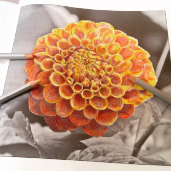 Drawn to Fabulous Flowers colouring book