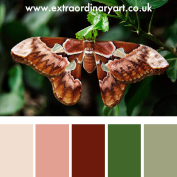 10 colour palettes inspired by beautiful moths