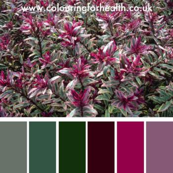 Hebe flowers colour palette