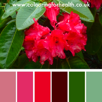 Hibiscus flower color palette