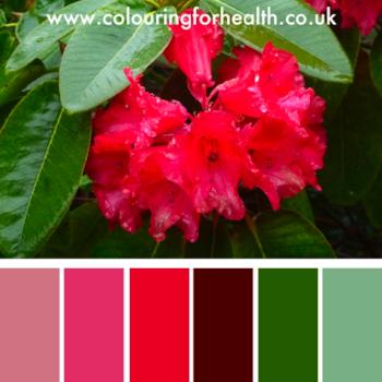 Hibiscus flower color palette