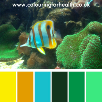 Angelfish in aquarium colour palette