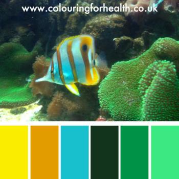 Angelfish in aquarium colour palette