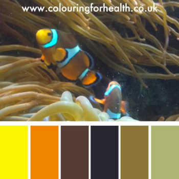 Clown fish in aquarium colour palette