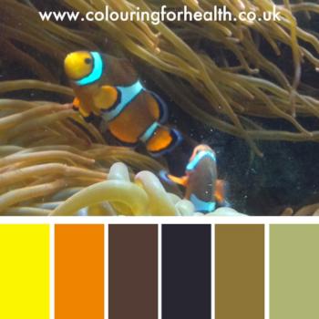 Clown fish in aquarium colour palette