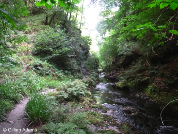 Lydford Gorge, Dartmoor © Gillian Adams