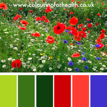 UK wildflowers colour palette