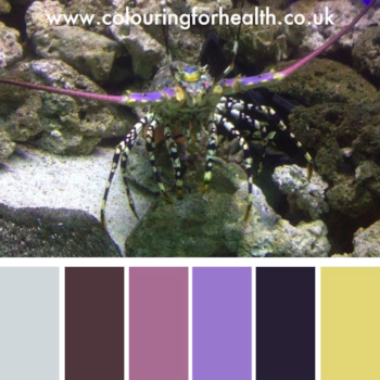 Lobster in aquarium colour palette