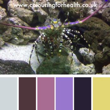 Lobster in aquarium colour palette