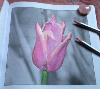 Tulip, Drawn to Fabulous Flowers (greyscale)
