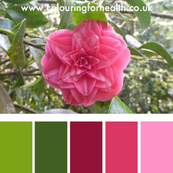 Colour palette from Heligan gardens