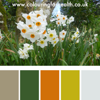 Colour palette for Heligan gardens