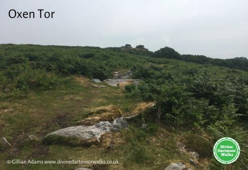 Oxen Tor  © Divine Dartmoor Walks