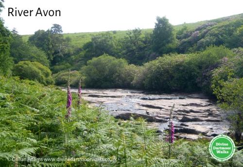 River Avon © Gillian Adams