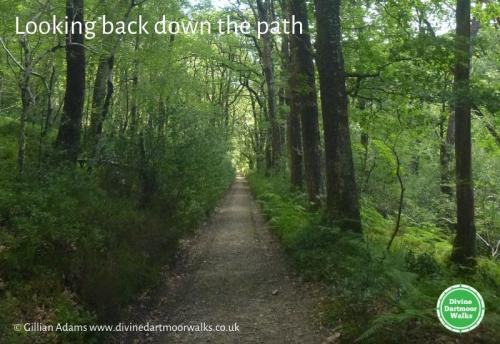 Yarner Woods path © Gillian Adams