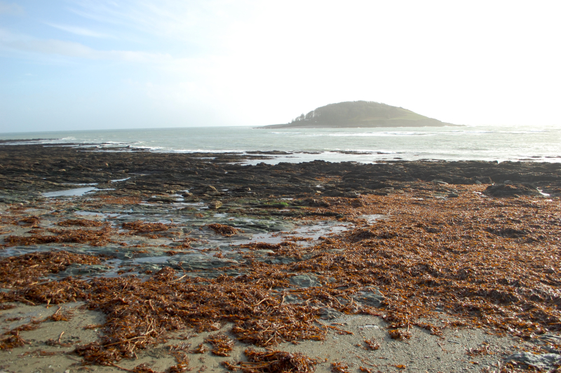 Looe Island from Hannafore by Gillian Adams